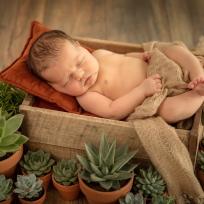 newborn bohemian terra